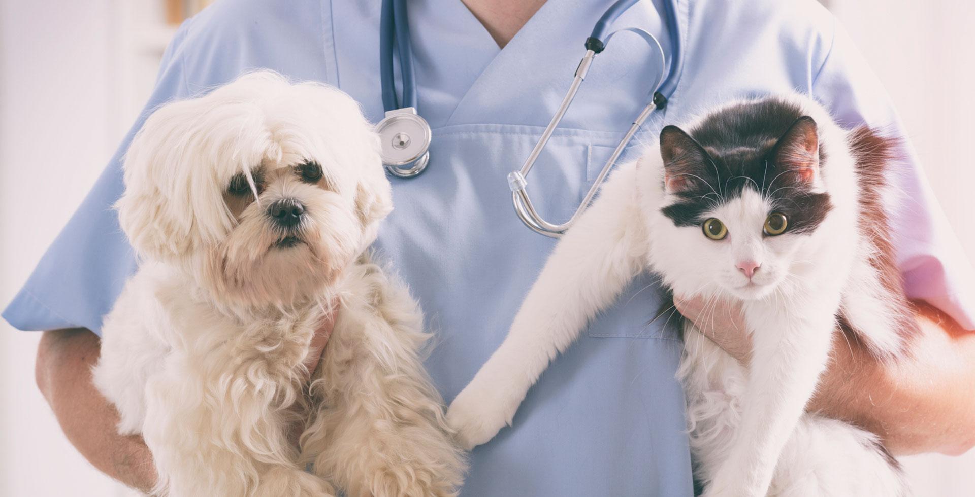 Dịch vụ chăm sóc thú cưng - ý tưởng kinh doanh không cần nhiều vốn